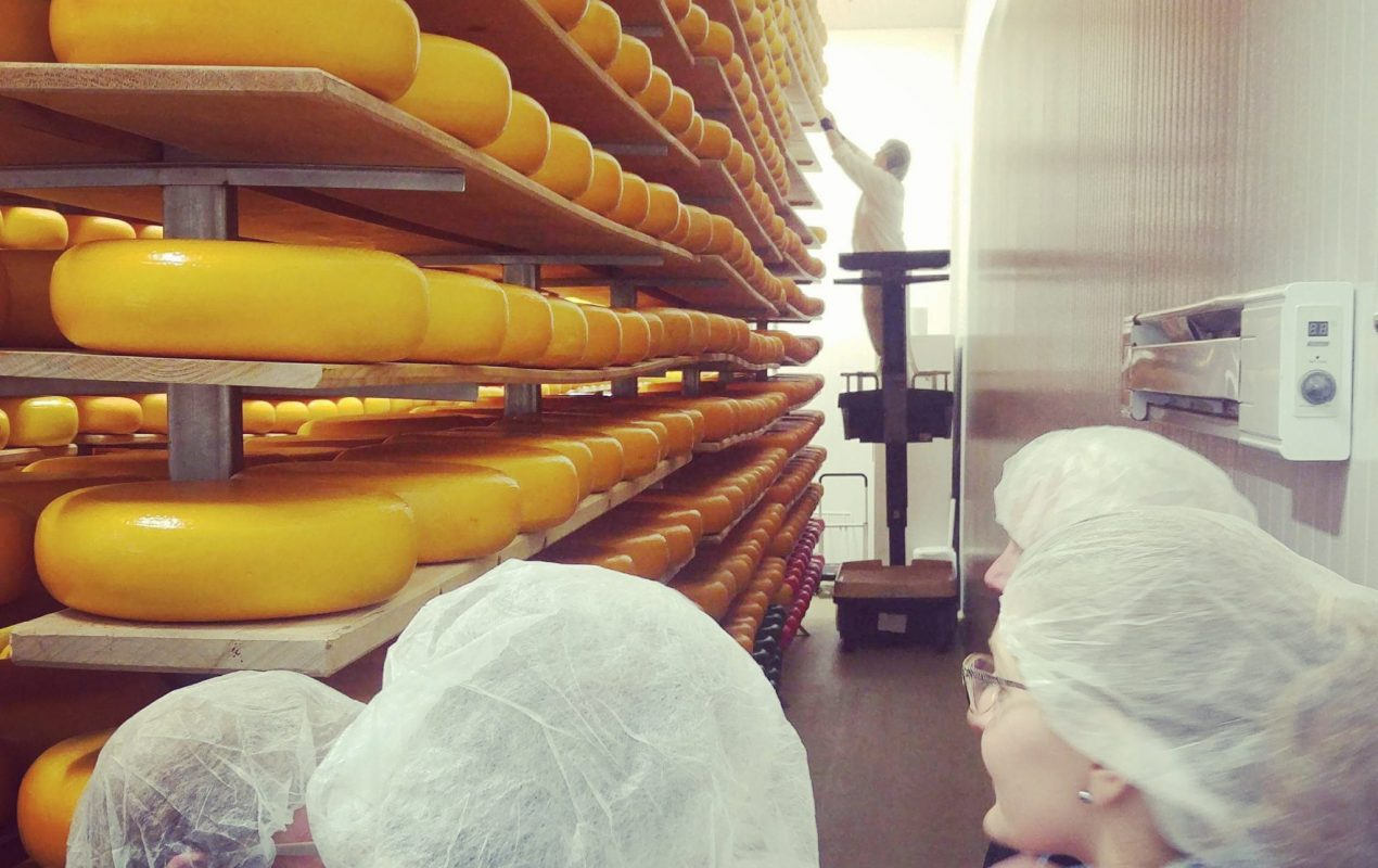 sarah and a couple attendees listen attentively to the head cheesemaker and owner at Mountainoak cheese co. Wheels of Gouda encased in yellow was lined the shelves that reach twenty feet in height. There is a man in the distance on a scissor lift rotating all of the wheels one at a time in the distance..